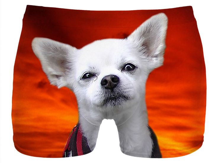 Check out my new product https://www.rageon.com/products/dog-chihuahua-men-underwear?aff=BWeX on RageOn!