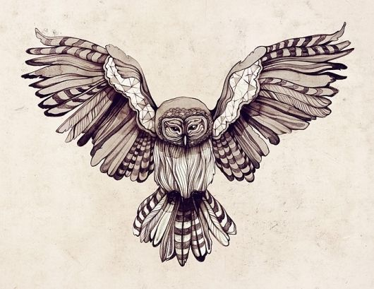 The Digital Playground of Sara Blake - The Birds, Owl, Illustration, Drawing, Outdoors, Feathers, Sketch