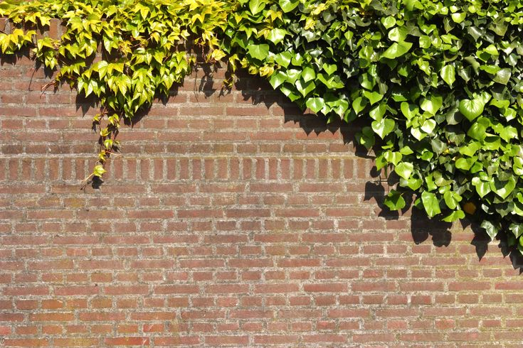 White vinegar is a safe, nontoxic method to get rid of most types of ivy, as vinegar's acid content makes it an ideal weed killer among its many other home uses