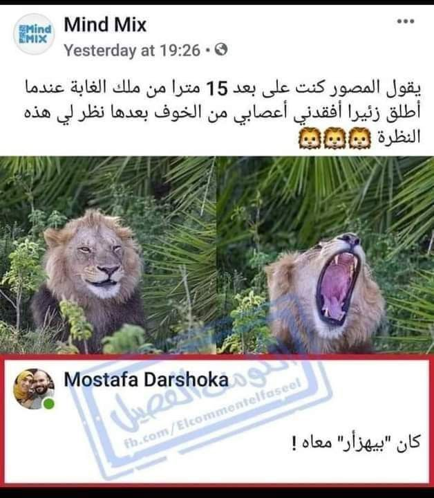 Pin By نورا جماز On شغفي In 2020 Fun Quotes Funny Arabic Funny Funny Comments