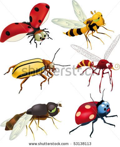 Colorful Vector Drawing Of Small Beetles. Insect Isolated On The White Background. Cartoon Insect Bug Icon. - 145816394 : Shutterstock