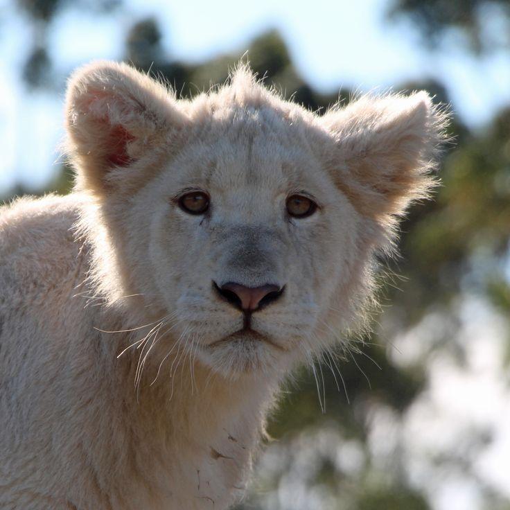 Makulu @ Tenikwa Wildlife Centre