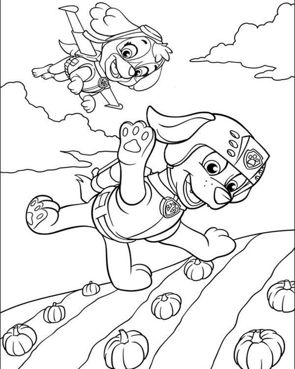 Paw Patrol Coloring Pages Skye And Zuma Flying Paw Patrol