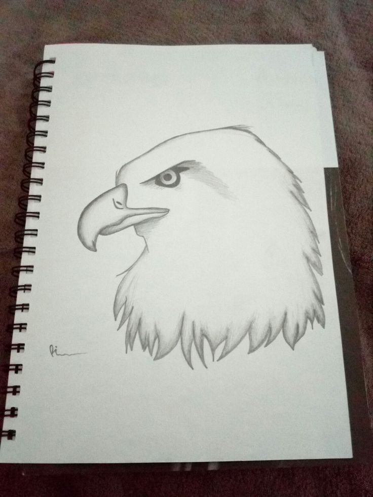 Bald Headed Eagle...almost appears furious