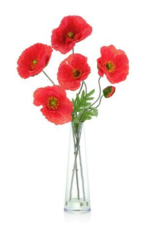 Buy Poppies In Vase from the Next UK online shop