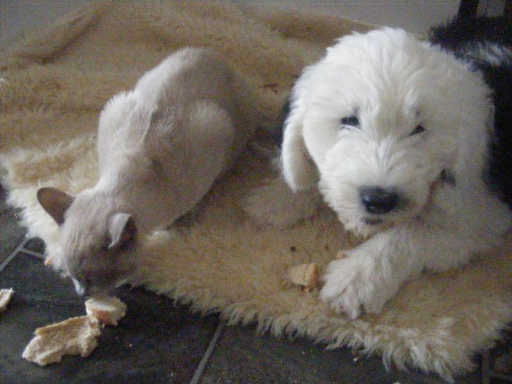 Bailey and Mishka sharing
