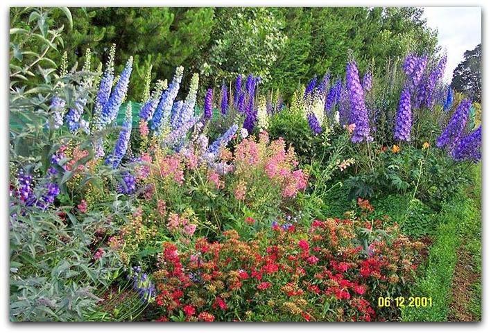 """Delphinium é um gênero de cerca de 300 espécies de plantas perenes com flores da família Ranunculaceae , nativas em todo o Hemisfério Norte e também nas altas montanhas da África tropical.  http://sergiozeiger.tumblr.com/post/118020535833/delphinium-e-um-genero-de-cerca-de-300-especies-de  Todos os membros do gênero são tóxicas para os seres humanos e animais. O nome comum """"espora"""" é compartilhado entre as espécies perenes e espécies anuais do gênero Consolida.   O nome """"delphinium"""" deriva…"""