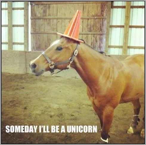 Funny horse. Someday I'll be a Unicorn Unicorns