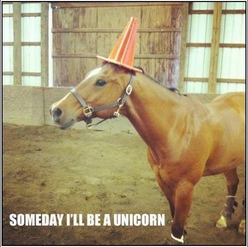 Funny horse. Someday I'll be a Unicorn Unicorns