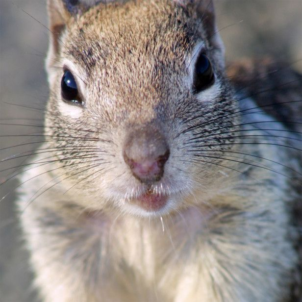 Learn how to keep squirrels out of your garden this is our biggest issue with a vegetable for How to keep squirrels out of my garden