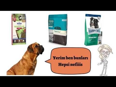 Köpek Malzemeleri İçin Ne Varsa Evcilal com'da