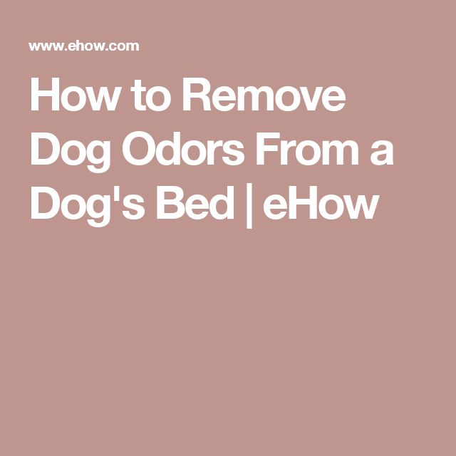 How to Remove Dog Odors From a Dog's Bed | eHow