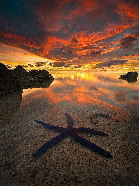 South Pacific Ocean Blue starfish - Aitutaki Atoll in Cook Islands
