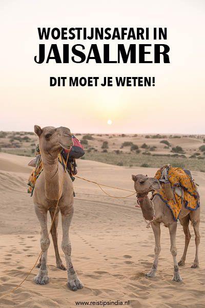 Wil je een woestijnsafari boeken bij Jaisalmer? In dit artikel deel ik handige tips en onmisbare informatie voor als je de Tharwoestijn in wilt.