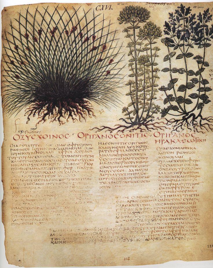 Herbal by Dioscoride