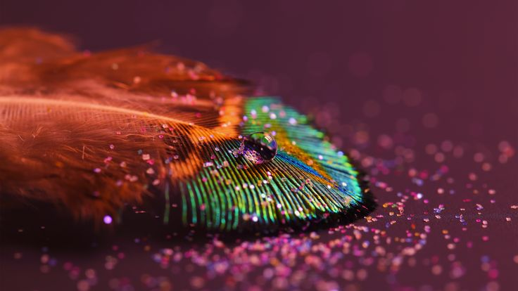 Colored Feather Water Drop  #Colored #Colorful #Drop #Feather #Multicolored #Water