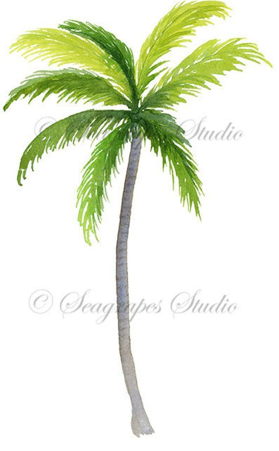 Watercolor Palm Tree Clipart Tropical Png Instant Download Etsy Palm Tree Clip Art Tree Clipart Palm Trees