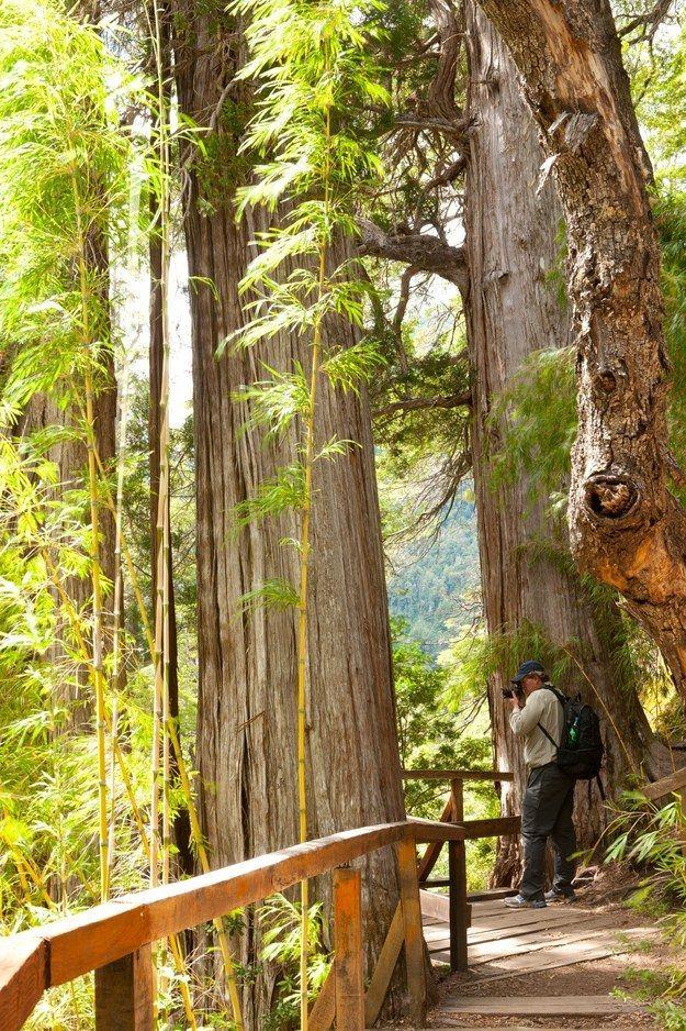 """Parque nacional LOS ALERCES - Tampoco querrás dejar de conocer al """"Abuelo"""", uno…"""