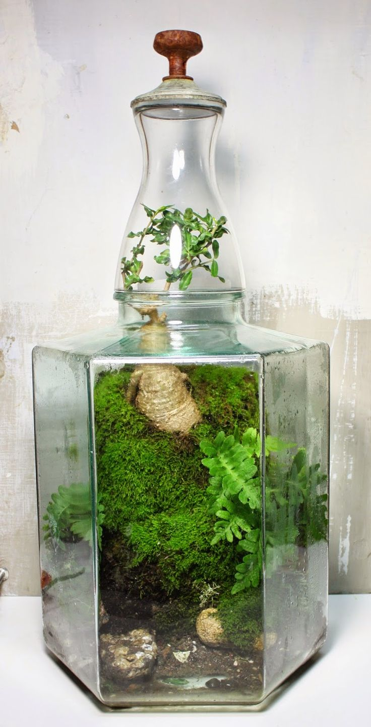 the slug and the squirrel terrarium creations