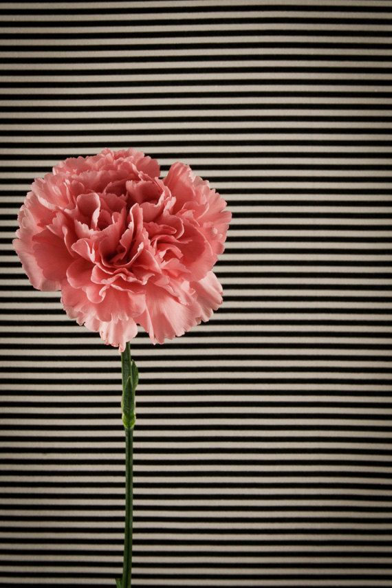 Pink Carnation Floral Fridge Magnet by TheMemorableImage on Etsy