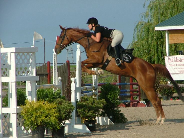1000 Images About English Riding On Pinterest Sam
