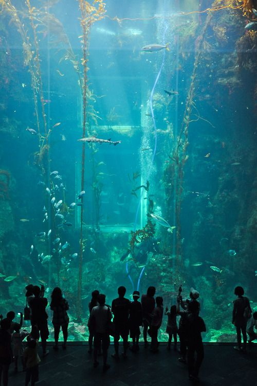 8 best Dream images on Pinterest Marine life, Ocean life and - marine biologist job description