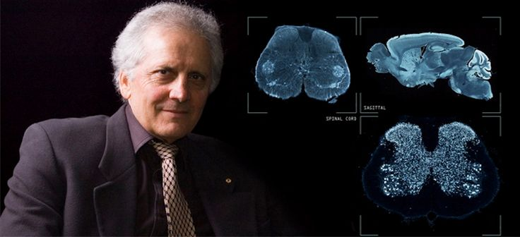 """George Paxinos: """"The man who mapped the human brain"""". - Dr George Paxinos is an internationally appreciable #scientist for his outstanding mappings of the #human #brain. Paxinos is a #Professor of #Psychology and #Medical #Sciences at the #Neuroscience #Research #Australia #Institute of the #University of New South Wales in #Sydney. - See more at  http://www.ellines.com/en/famous-greeks/4659-o-anthropos-pou-chartografise-ton-anthropino-egkefalo/ Copyright © Ellines.com"""