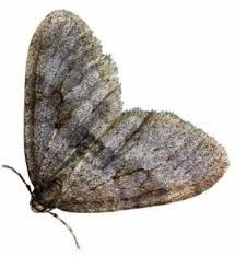 Moth control London Ontario