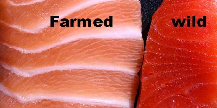 Killing erection food - farmed fish
