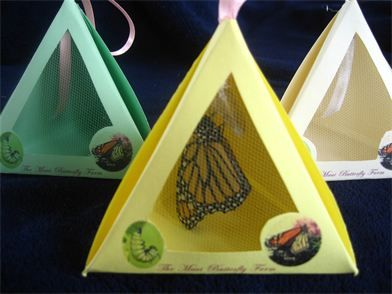 Live Butterfly Party Favors - Chinese Yellow Tailed Swallowtail Butterfly - Release at weddings, memorials, graduations, parties, events or just Raise butterflies at home for your garden / greenhouse / sun porch / deck / kitchen / just to have living in your house!