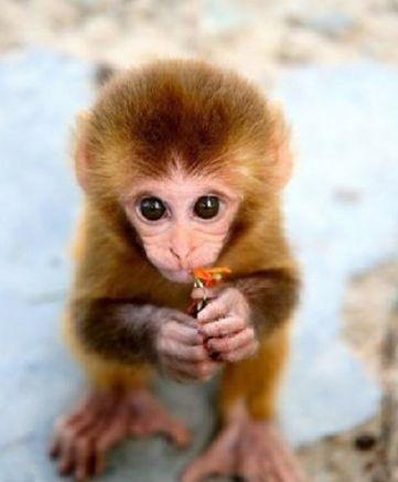 Cute Baby Monkeys