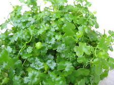 Carpet aquarium plants http://www.ebay.com/sch/wek5858/m.html?item=152256039597