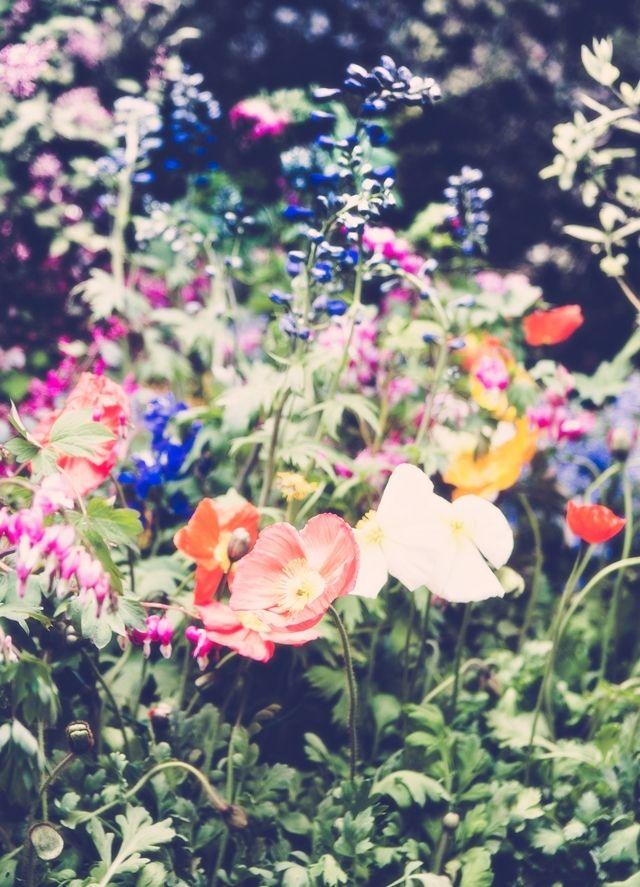 Mixed flowers! Koop verschillende zaden, meng ze door elkaar en strooi ze uit; voila. Je tuin was nog nooit zo vol en trendy.
