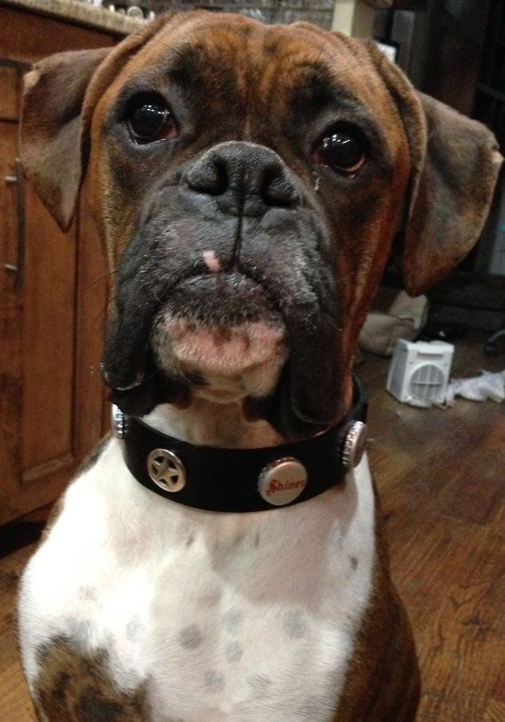 Beer Cap Dog Collars