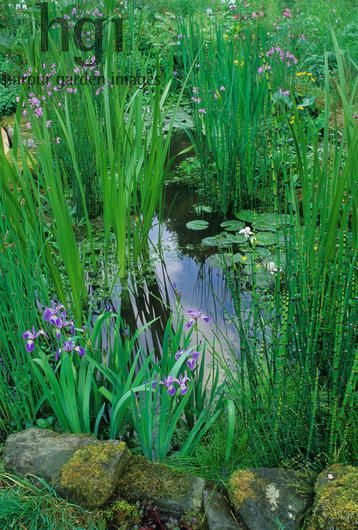 Harpur Garden Images :: 02mh122 Small wildlife pond planted with Equisetum, Irises and Water Lilies. Insects wild natural green foliage purple leaves colour colours color colors flower flowers flowering bloom blooms nymphaea stones boulders rocks pool pools iris Design: Jinny Blom and HRH the Prince of Wales. RHS Chelsea 2002. Small water features Ponds Naturalistic Marcus Harpur Please read our licence terms. All digital images must be destroyed unless otherwise agreed in writing…