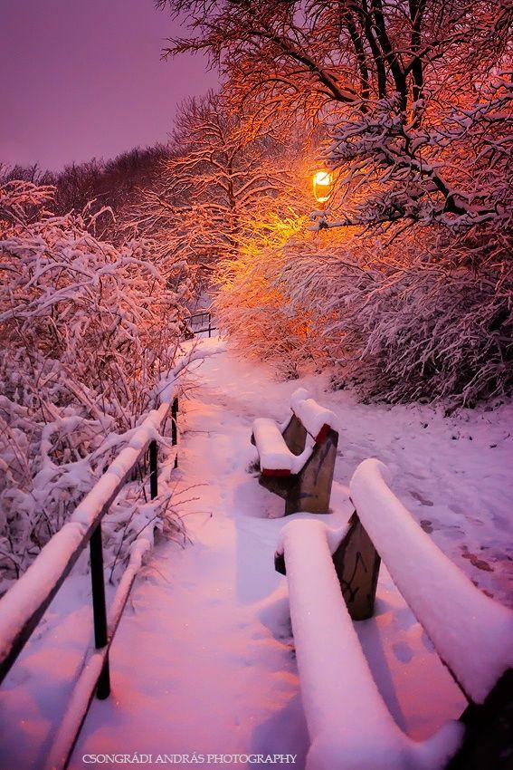 Iarna frumoasa!
