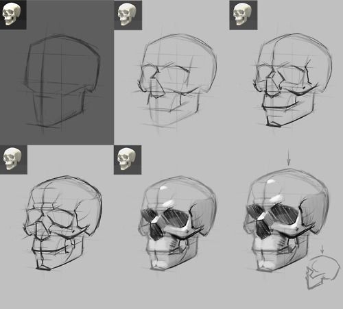 Only Best 25 Ideas About Skull Drawings On Pinterest: Best 25+ Skull Reference Ideas On Pinterest