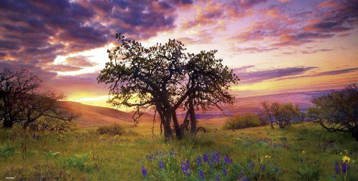 Puzzle 2000 pièces Arbre Oak, Columbia Hils state Park, USA Photo de Marc Adamus Réf : 29472 Heye www.puzzlemanie.fr