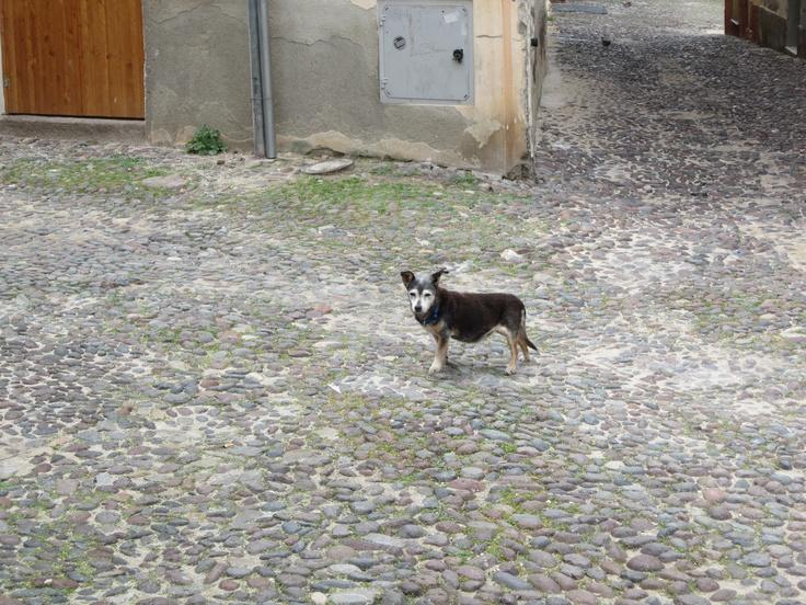 Italian watchdog