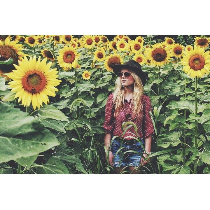 Sunflower field. This field is somewhat impossible but look how awesome!