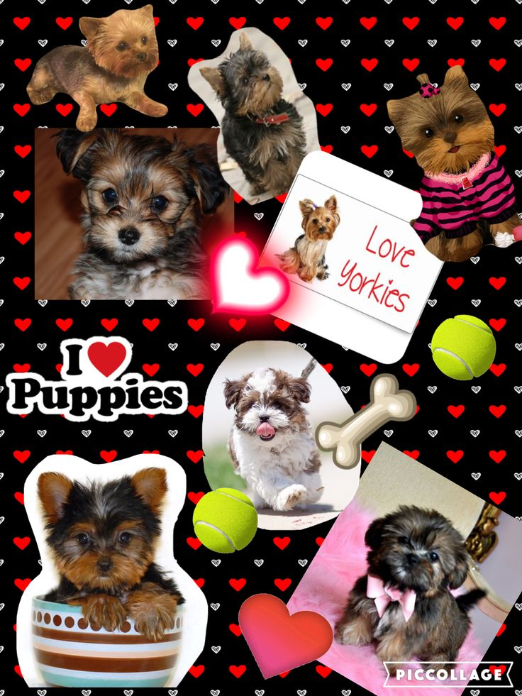 Love your yorkie! (Or in my case, yorkie/shih tzu