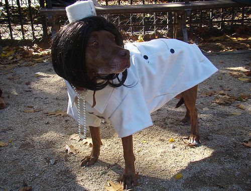 wikiHow to Choose Cheap Small Dog Halloween Costumes -- via wikiHow.com