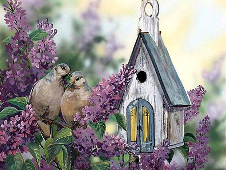 Lovey dovey bird houses pinterest for Dove bird house