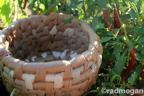 radmegan: in words and pictures: Going Green with Wrapped Baskets