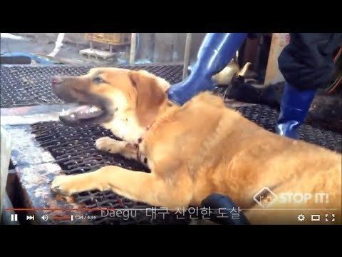 ❤️For more actions you can take, please visit:  http://koreandogs.org/pc2018-usa/ United States Olympic Committee: Take a stand in PyeongChang 2018 against the dog and cat meat trade! United States Olympic Committee: PyeongChang, South Korea, set to play host to the world in the 2018 Winter...
