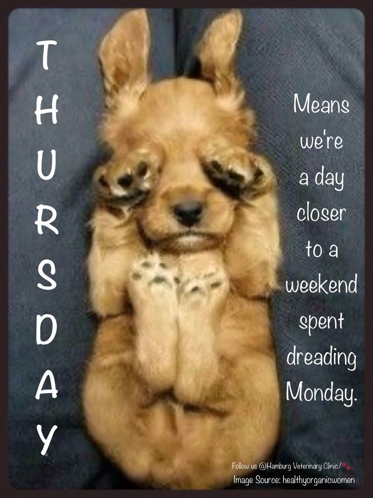 Happy Thursday Images With Dogs Thursday funny | Monda...