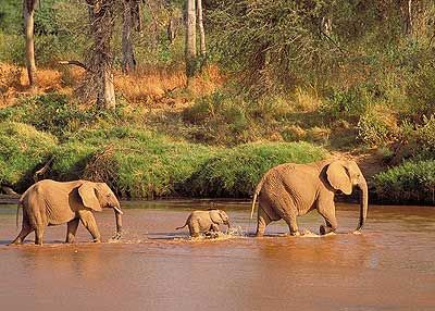 The three reserves of Tsavo East, Tsavo West and Chyulu Hills cover an enormous tract of land in southern Kenya. The main Nairobi to Mombasa road and railway splits Tsavo East and West right down the middle, which neatly cuts the parks into two.