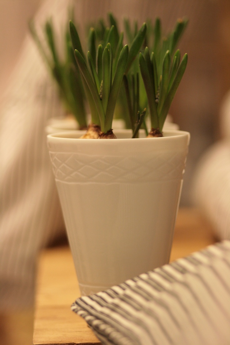 Vase with muscari from TineK, Holmehuset.