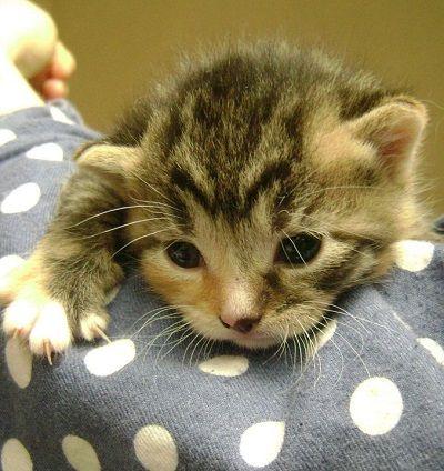 Cat Diarrhea - Best Pet Home Remedies