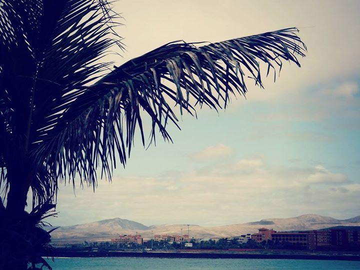 #Photography #Landscape #Palm #Tree #Sea #Spain